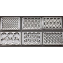 12 Well Non-treated Plate with Lid, Individual, Sterile, CS100