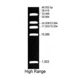 1.5 kb to 48.5 kb High Range DNA Marker, 150ug, EA1