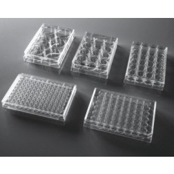 384 Well Cell Culture Plate, clear, flat bottom, Non-Treated, sterile 1/pack, 100/cs