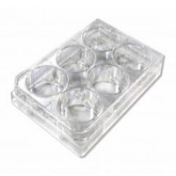 Tissue Culture Plate, 6 Well, 1UNIT, PK1